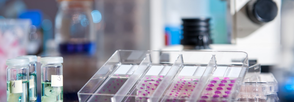 Plastic tray of histological tissue samples next to a microscope